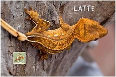 Latte-420-1785.jpg