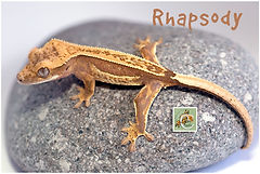 Rhapsody-0120-8438-2.jpg