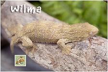 Wilma-420-1666.jpg