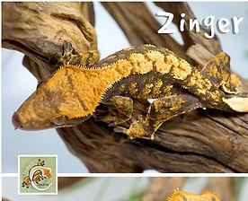 Zinger%202_edited.jpg