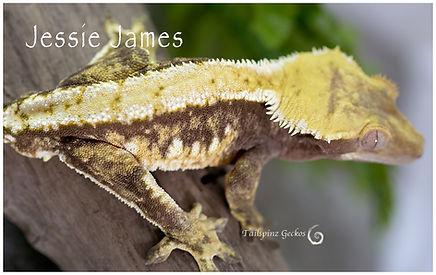 JESSIE--JAMES-1217-4379.jpg