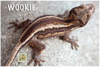 WOOKIE-320-0744.jpg