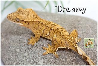 Dreamy 2-21-5912.jpg