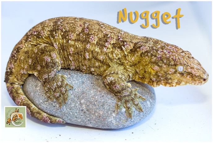 NUGGET 0220