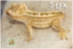 Styx-420-1589.jpg