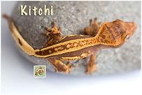 Kitchi--0185.jpg