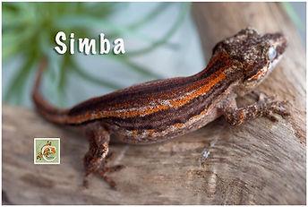 Simba-320-0611.jpg