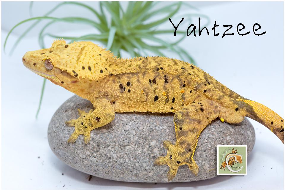 Yahtzee 1-21-5136