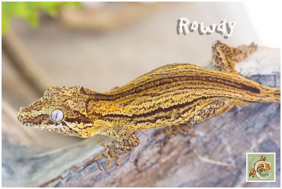 ROWDY (Rhachous)