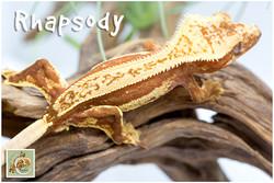 Rhapsody 12-20-4951
