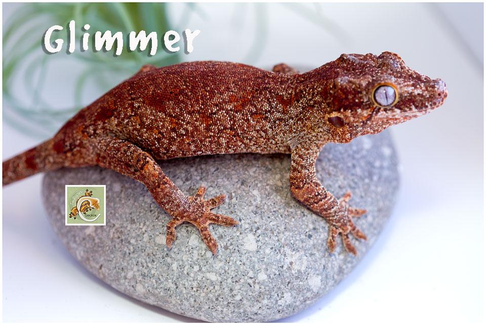 Glimmer-320-1545