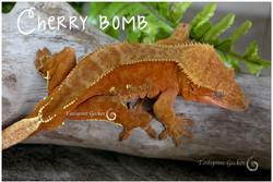 geckos1217-4308-Edit.jpg