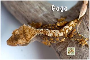 Gogo-320-0710.jpg