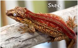 SHADY-2_edited
