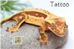 Tattoo 1-21-5088