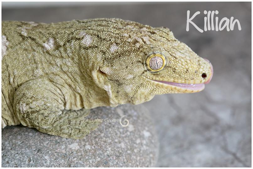 Killian-1-4-16-9792.jpg