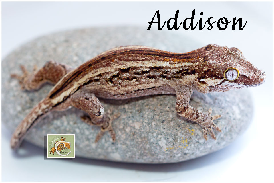 Addison-0120-8303