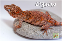 Jigsaw-0120-8577