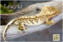 sawyer-032821-6332