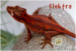 Elektra-320-1513
