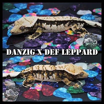 DANZIG X DEF LEOPARD.jpg