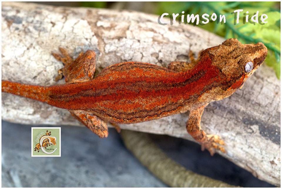 Crimson-Tide-420-1989
