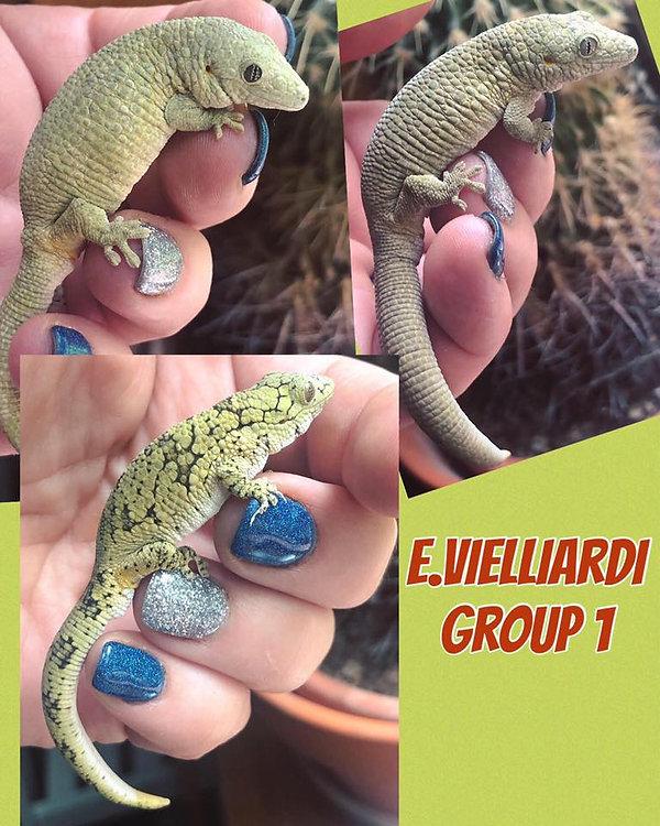 EV Group 1.jpg