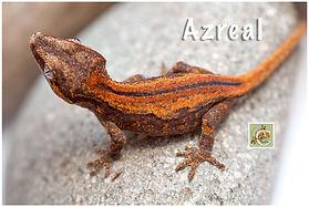 Azreal-320-0783.jpg