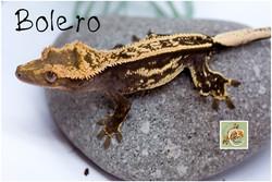 Bolero 2-21-5934
