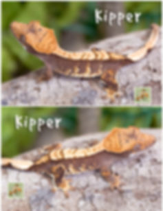 Kipper-2.jpg
