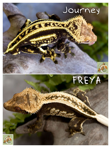 Journey-x-Freya.jpg