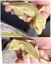 Meridian-2.jpg