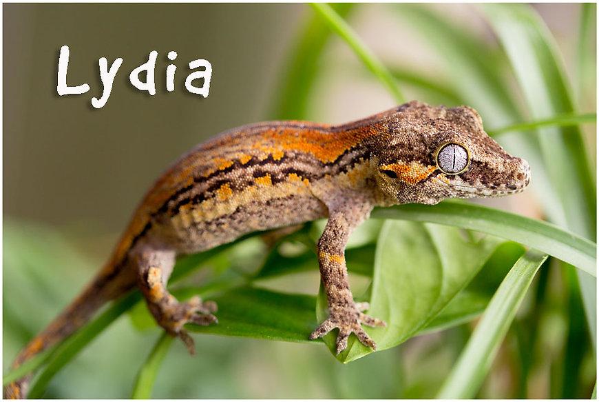 Lydia-2-621-7897-Edit.jpg