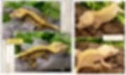 spatz x clementine.jpg