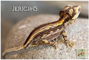 JERICHO-819-2960.jpg