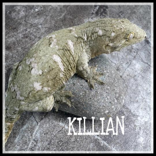 killian 4.jpg