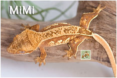 Mimi-320-0650.jpg