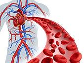 Corpus Vitale gezond tot in de haarvaten met vasculaire therapie voor gebruik in de professionele praktijk en voor thuis.