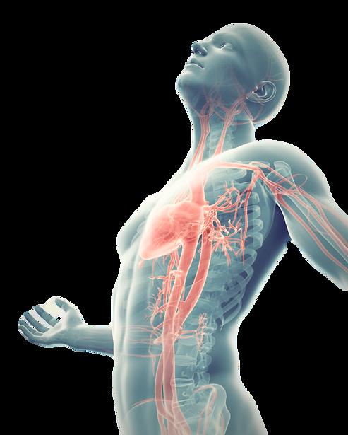 Met EWOT ontstekingsremmende zuurstoftherapie verhoog je op eenvoudige wijze het zuurstofniveau in uw weefsels en cellen.
