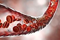 Met EWOT betere zuurstofoverdracht naar cellen
