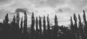 trees small garden design