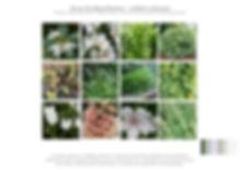 WEbsite Planting4.jpg