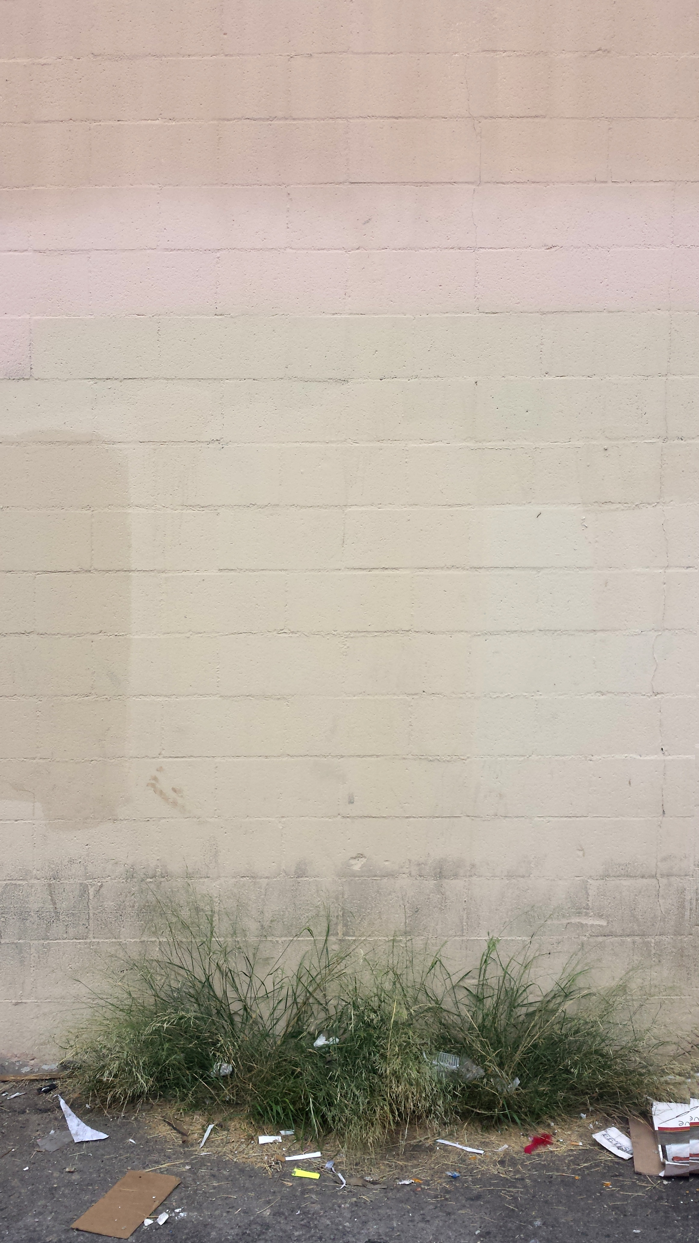 20171101_124740. Wall with Grass