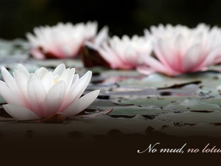 No Mud, No Lotus