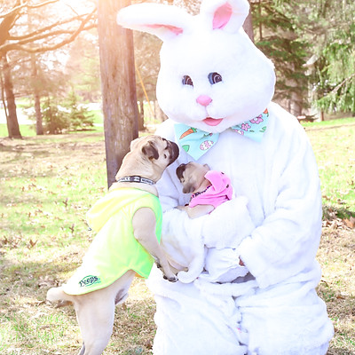 Easter Bunny Dog Mini Sessions- New Hope Pet Rescue Fundraiser