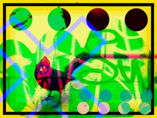 Graffitt Bird