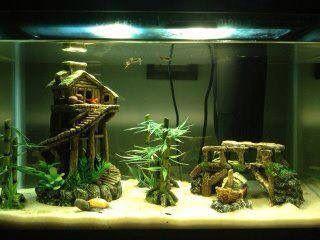 House aquarium
