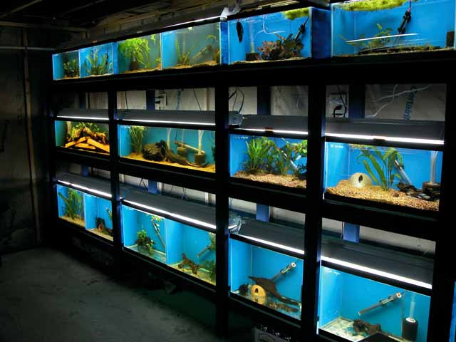 Shop Aquarium