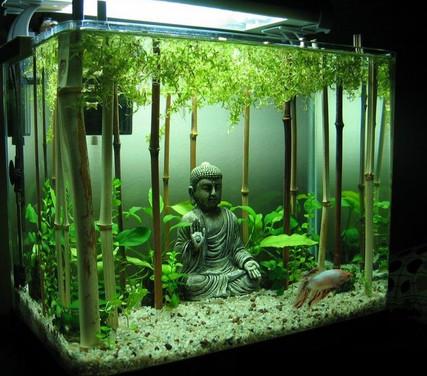 Buddha Planted