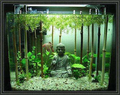 aquarium-decoration-ideas-15-best-five-g